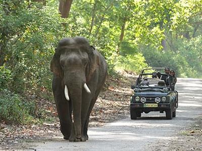 JImcorbet Nationalpark